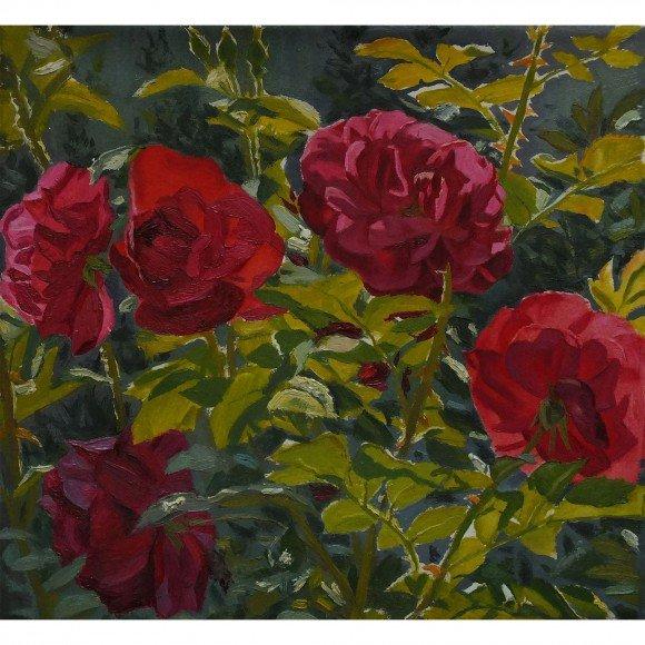 Розы в саду Беленькая Надежда