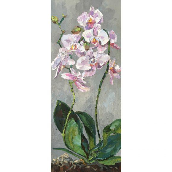Орхидеи Островская Елена