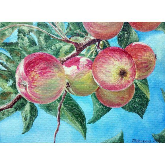 Яблоки Шаргина Любовь
