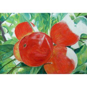 Яблоки-освещенные-солнцем